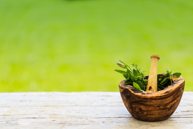 צמחי מרפא פוריות